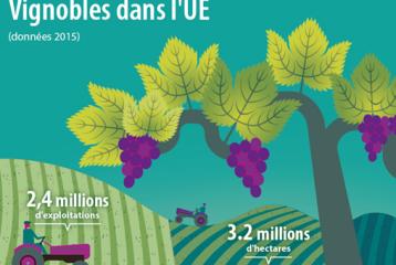 Plus de trois millions d'hectares de vignobles dans l'UE...