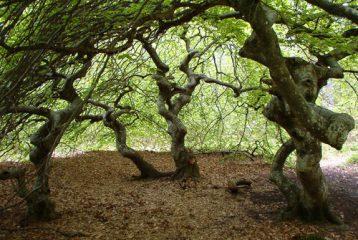 Appel à projets FEADER pour soutenir les contrats forestiers en Champagne-Ardenne
