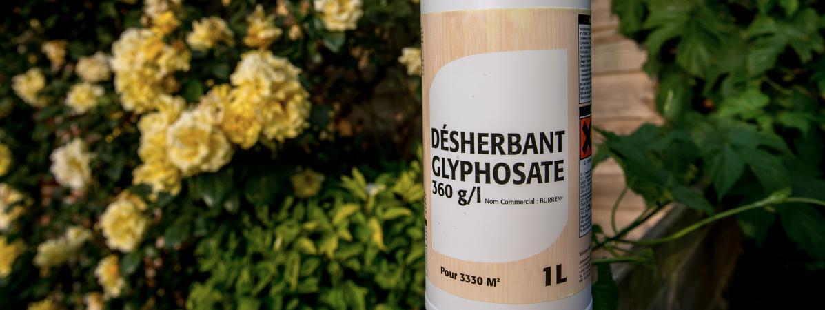 Glyphosate : nouvelle autorisation de cinq ans