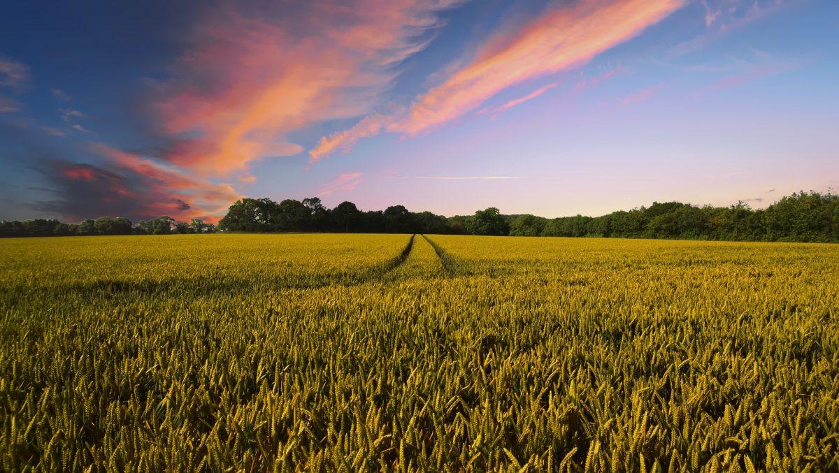 Dossier spécial sur l'agriculture en Europe - Toute l'Europe