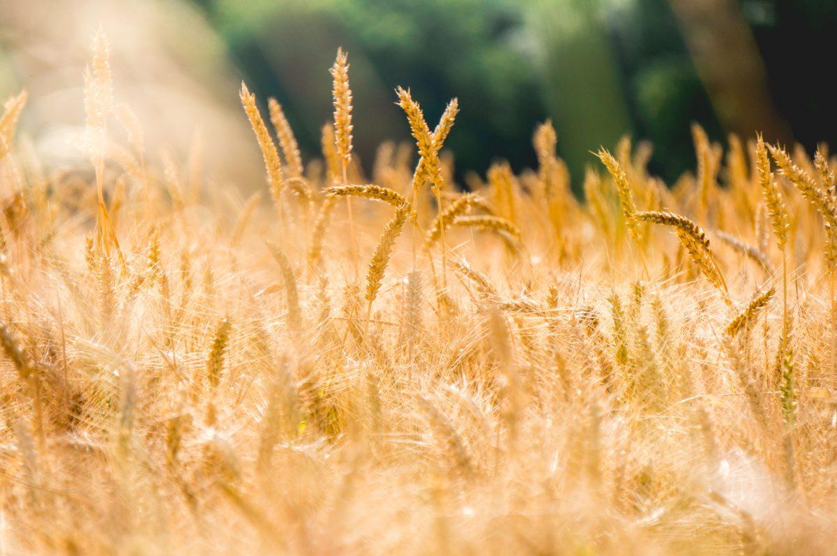 Budget de l'Union: la politique agricole commune après 2020