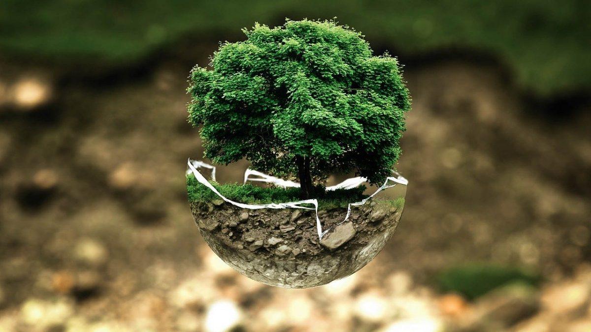 Concours : L'environnement, c'est mon affaire !