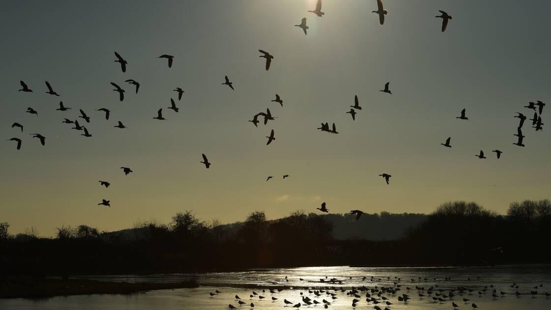 Produits chimiques : L'UE protège la faune sauvage des effets néfastes du plomb sur [...]