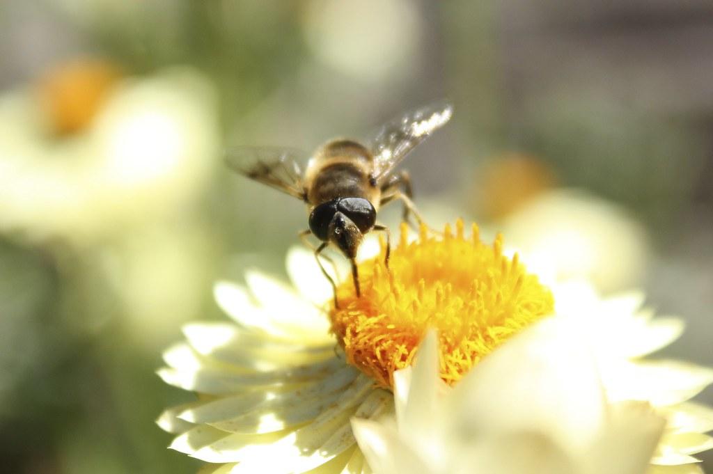 Le Pollinator Park, simulation d'un monde sans abeilles